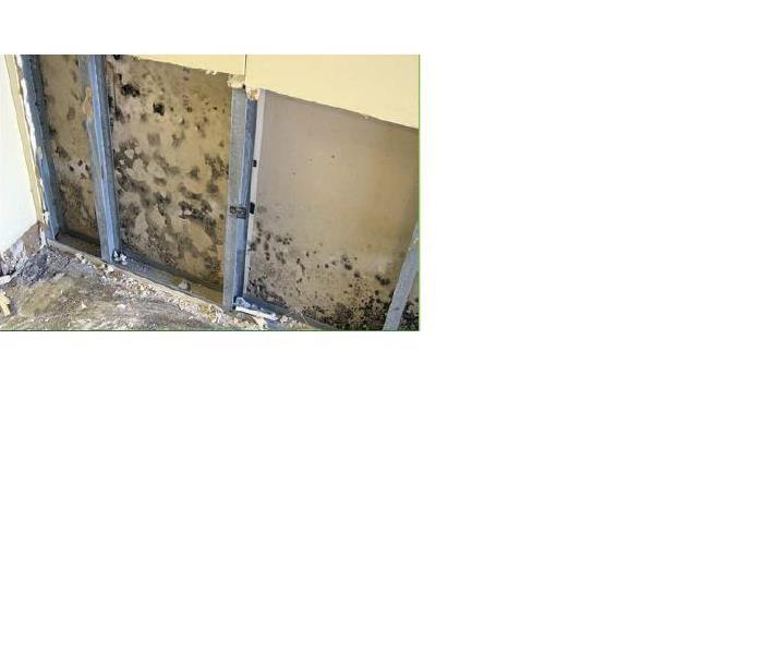 Mold Remediation Mold Remediation in Pettis and Johnson Counties